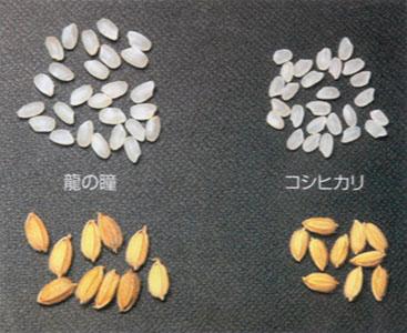 「全国米・食味分析鑑定コンクール」「あなたが選ぶ日本一おいしい米コンテスト」で何度も最優秀賞に輝いたお米